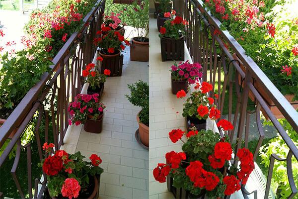 Verdeblog giardinaggio fai da te for Surfinia balcone